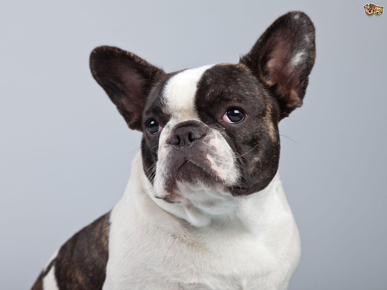 bulldog insurance photo - 1