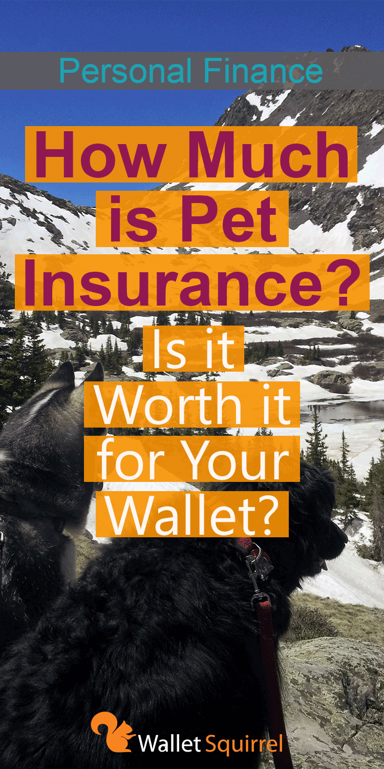 how much is pet insurance photo - 1