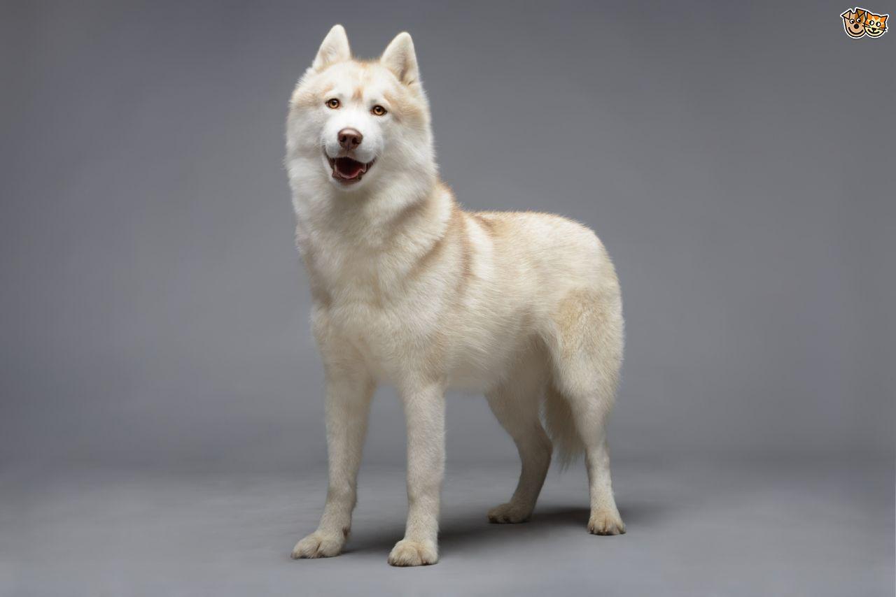 husky insurance photo - 1