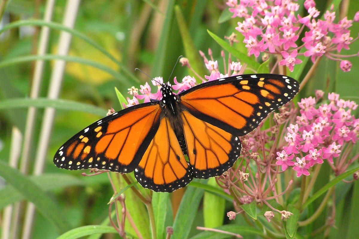 monarch insurance photo - 1