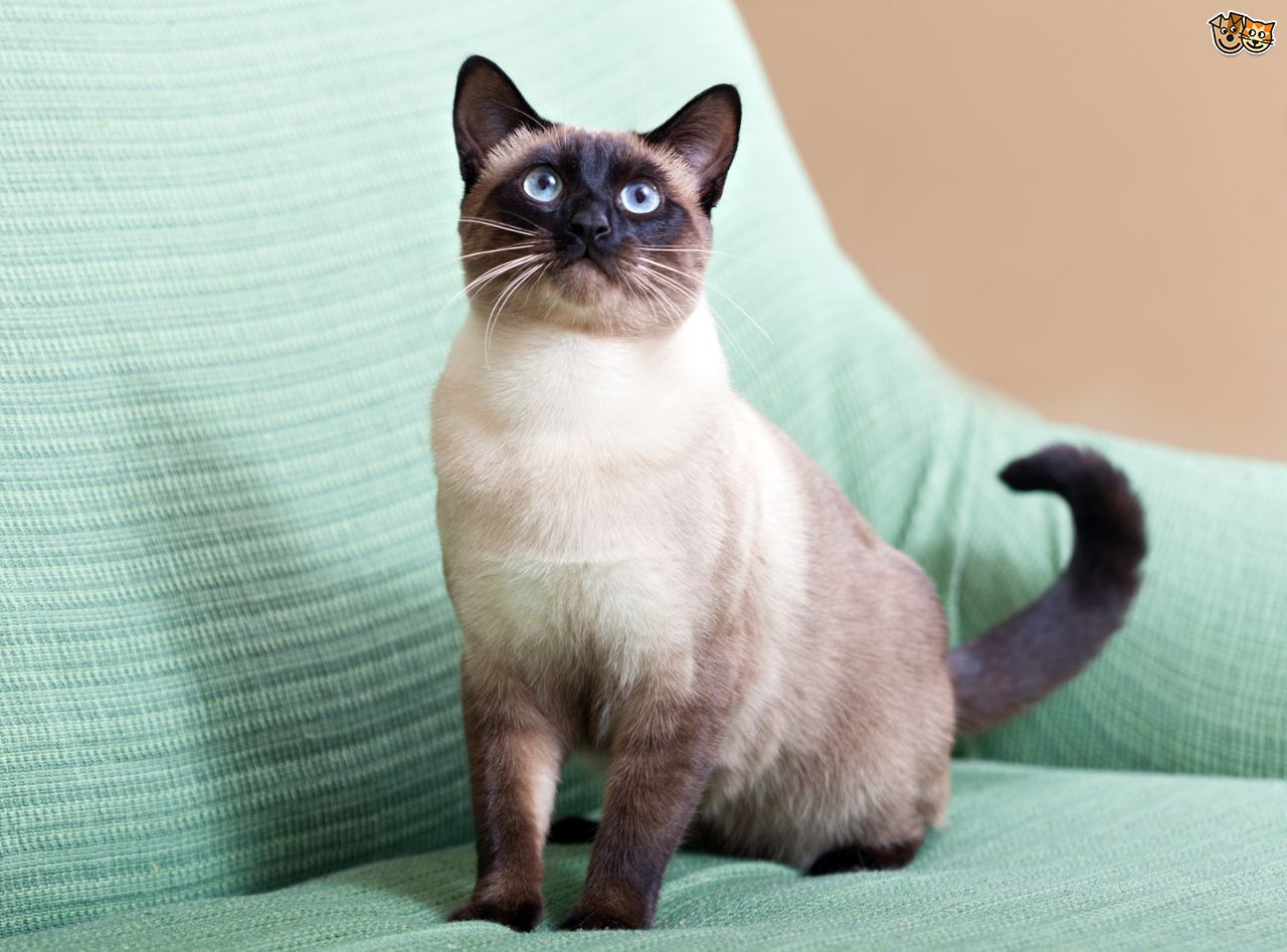 pet insurance for cats photo - 1