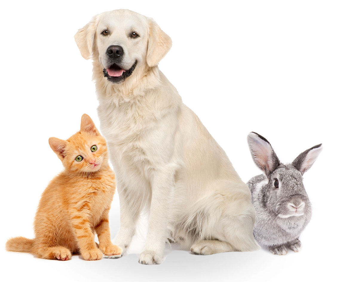 pet plan pet insurance photo - 1